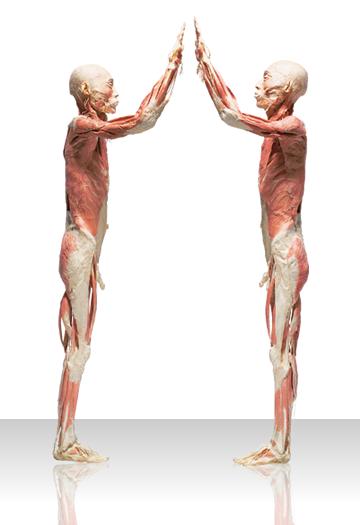 bodies-expo